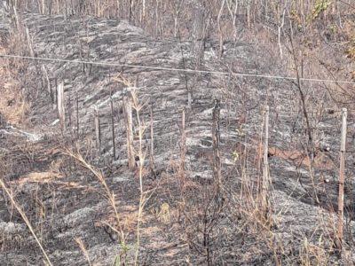 Fumaça das queimadas traz riscos para Saúde e ao Meio Ambiente