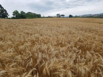 Fornecimento de farinha de trigo já  está sendo prejudicado, diz Abitrigo