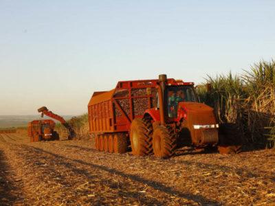 China se mantém como principal  parceira comercial do Agro Paulista