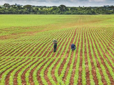 Valor Bruto da Produção Agropecuária  é estimado em R$ 689,97 bi