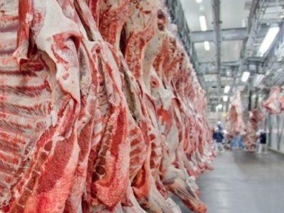 Ultrassom de carcaça avalia  potencial do gado