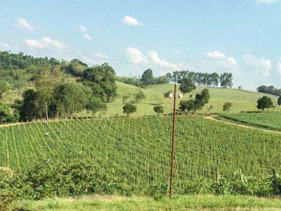 Os vinhos e o sul de Minas Gerais