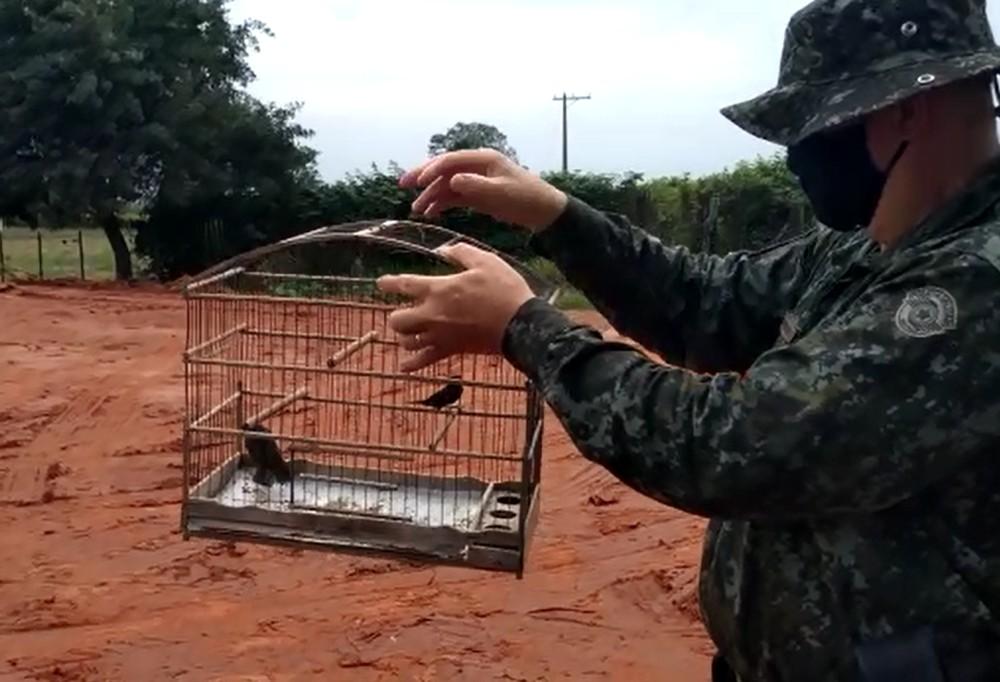 Polícia solta pássaros e multa dono em R$ 6 mil