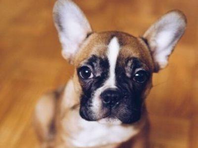 As principais causas de atendimentos clínicos de cães e gatos no Brasil