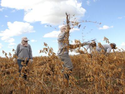 PIB do agro deve crescer 3,2% em 2021, projeta Ipea