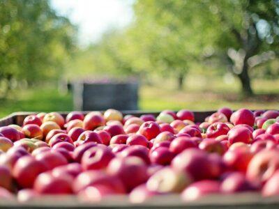 Seguro rural: ministério e entidades avaliam produtos para oito frutas