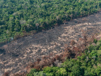 Desmate na Amazônia tem alta de 34% no ano e queda de 28% em julho