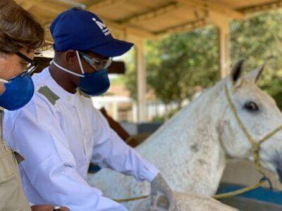 Covid-19: soro produzido por cavalo têm anticorpos potentes contra o vírus