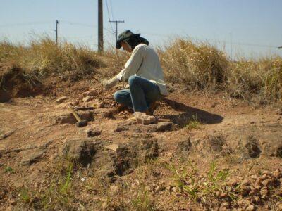 Museu de Paleontologia divulga novos achados de fósseis no Oeste Paulista