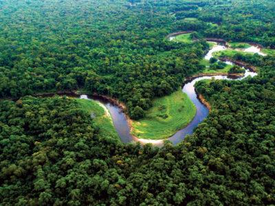 Baseadas em ativos da floresta, startups da Amazônia impulsionam a bioeconomia