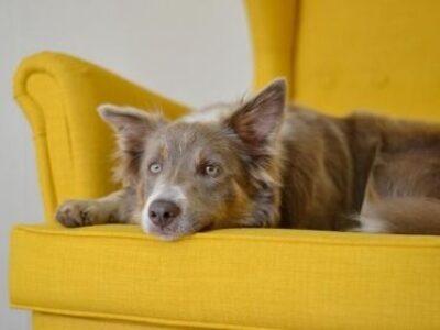 Pets também podem ter glaucoma e catarata