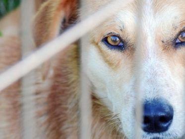 Guarda-responsável é chave para reduzir os índices de abandono de pets