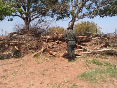 Polícia multa fazenda em R$ 17 mil por destruir vegetação de APP