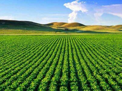CNA discute perspectivas do agro brasileiro e comércio com países islâmicos