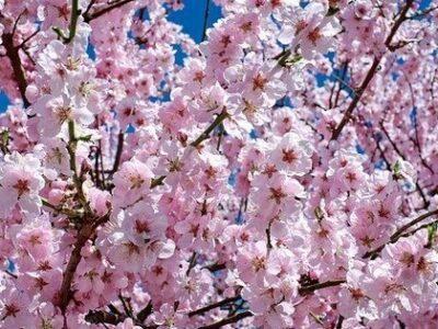 Primavera começa nesta terça com temperatura mais amena no Estado de SP
