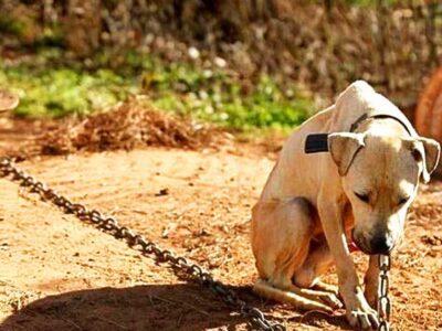 Bolsonaro sanciona lei que aumenta pena para maus-tratos a cães e gatos