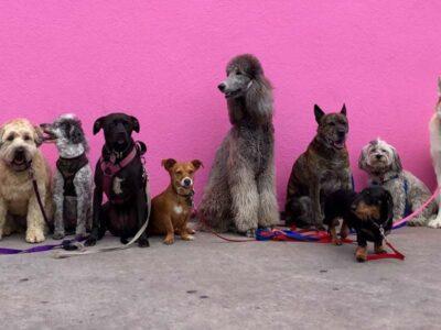 Número de cães e gatos no Brasil deve chegar a mais de 100 milhões em 10 anos