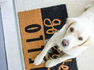 Atenção, tutores: produtos de limpeza podem intoxicar os animais