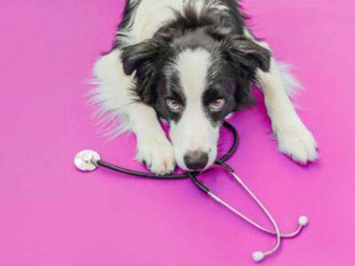 5 principais dúvidas sobre o câncer de mama em pets