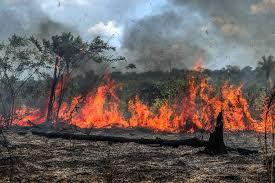 Em 13 dias, queimadas na Amazônia já superam total do fogo de outubro de 2019