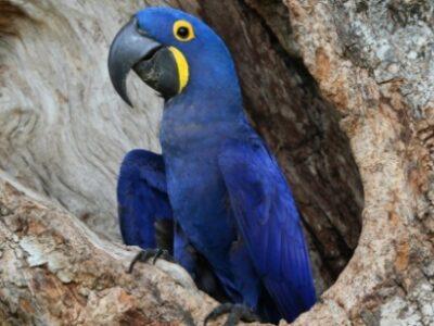 Brasil tem mais de 3 mil espécies ameaçadas de extinção, afirma IBGE