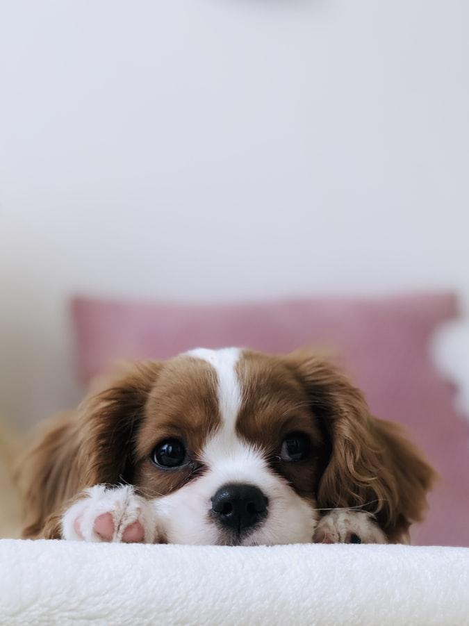 Vacinas atrasadas? Saiba quais os impactos para a saúde dos animais domésticos