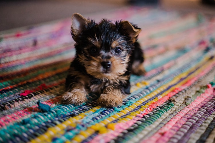 Você está preparado para ter um cãozinho?