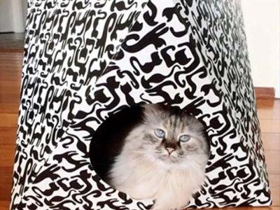 Toca funcional para gatos