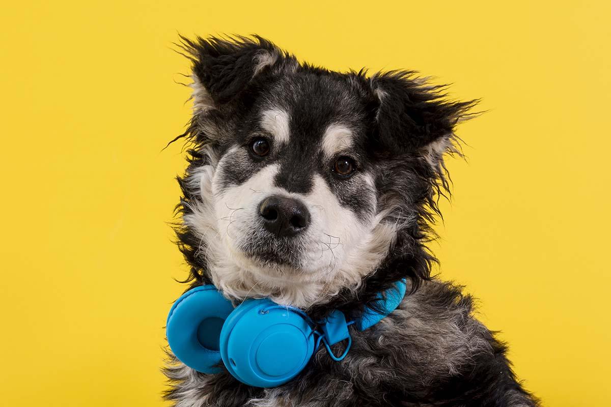 Saiba como proteger seu pet do barulho dos fogos