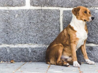 Dezembro Verde: campanha visa prevenção de maus-tratos e do abandono de animais
