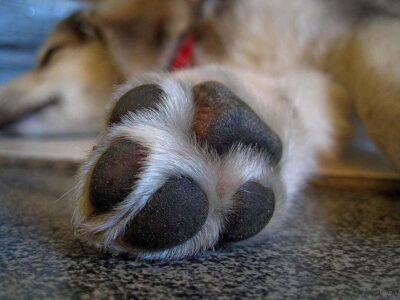 Verão: altas temperaturas podem causar danos à saúde dos pets