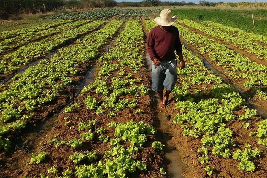Com muita tecnologia e inovação, produção  agropecuária dobrou no Brasil em 22 anos
