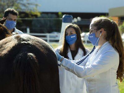 Inscrições para mestrado profissional em Saúde Animal, Produção e Ambiente da Unimar terminam amanhã