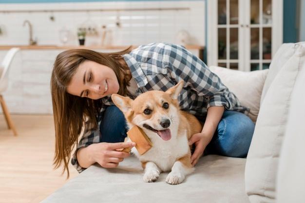 Cuidados fundamentais com a pele dos cães