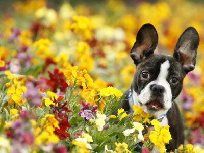Primavera: Saiba os principais cuidados com os pets nesta época do ano
