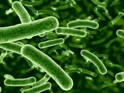 Mais de 10 milhões de vidas podem ser perdidas, até 2050, pelo fenômeno da resistência antimicrobiana