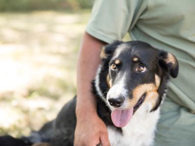 Conheça os nutrientes que influenciam no desenvolvimento ósseo dos pets