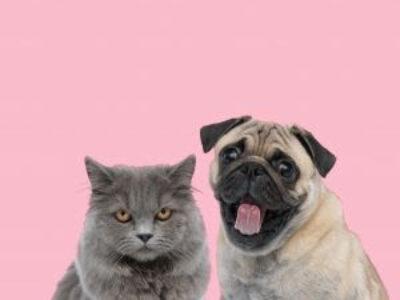 Saiba como o câncer pode afetar os pets
